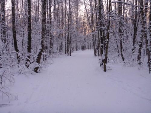 Кунцевский лес